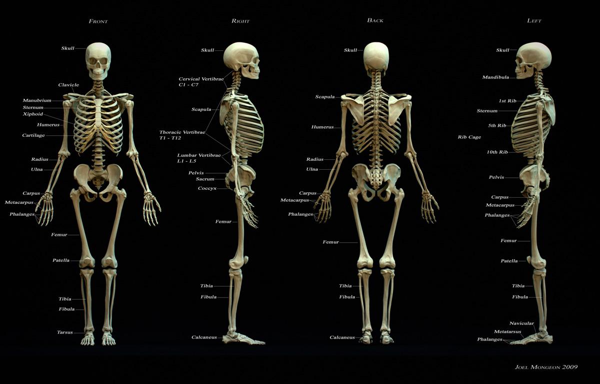 skelet30983532106