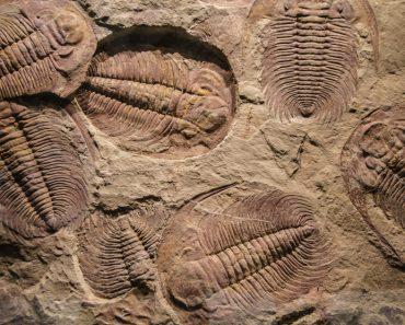 O que é Lagerstätte e por que é tão bom em criar fósseis?