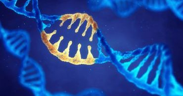 O empreendedorismo está em nossos genes?