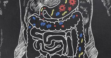 Como as bactérias intestinais ajudam na digestão?