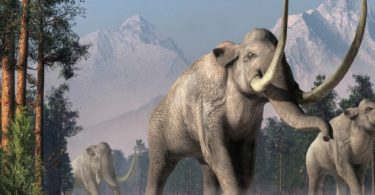 Como o desaparecimento dos mamutes afetou o ecossistema da Terra?