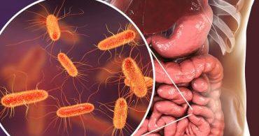 As bactérias intestinais afetam o sono?