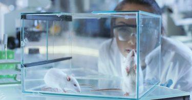 8 Animais Usados Na Produção De Vacinas