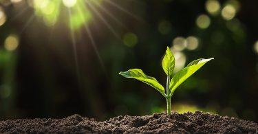 Onde As Plantas Armazenam Seus Alimentos?
